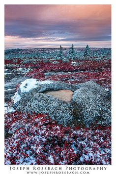 """""""Transitions,"""" autumn color and snow mix, Bear Rocks, Dolly Sods Wilderness, West Virginia"""