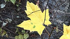 Wintergartenbau   http://htl.li/gjQ4D