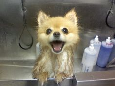 This dog who actually looks forward to his bath time. | 26 Of The Happiest Dogs Of All Time