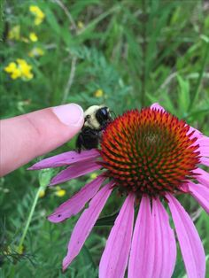 Bumble bee petting