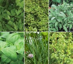 good herbs to group together in a pot