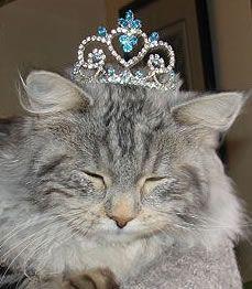 cat with tiara (realitytiara.com)