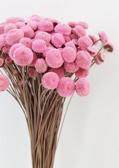 This unique and adorable dried floral button bundle in pink is the perfect addition to your floral arrangements to add texture and color. Great to fill DIY bouquets and centerpieces, or even make boutonnieres. Diy Wedding Bouquet, Diy Bouquet, Wedding Nails, Diy Flowers, Flower Pots, Cactus Flower, Exotic Flowers, Purple Flowers, Turquoise Wedding Flowers