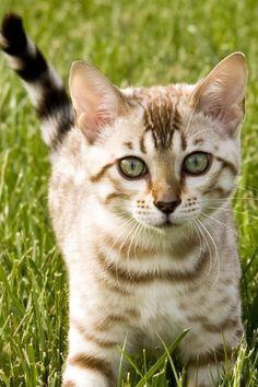 Pretty kitty:)