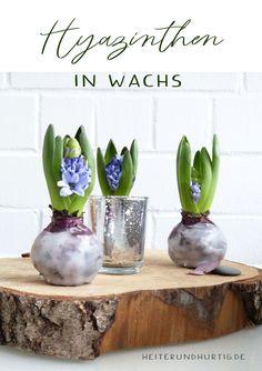 Bezaubernde Frühlingsdeko mit Blumenzwiebeln. So kannst du Blumen ohne Vase oder Blumentopf dekorieren. #frühlingsdeko Amaryllis, Spring Time, Planter Pots, Indoor, Vase, Deco, Blog, Bottles, Candle Wax