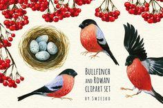 Bullfinch watercolor clipart By swiejko