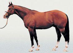 Noverre(1998)Rahy- Danseur Fabuleux By Northern Dancer. 4x4 To Wild Risk, 4x5 To Northern Dancer & Almamoud, Won Sussex S(Eng-1), July S(Eng-2), Champagne(Eng-2), Prix La Fleche(Fr), 2nd Dubai Duty Free(UAE-1), 3rd Prix Du Haras(Fr-1) Died In 2012.