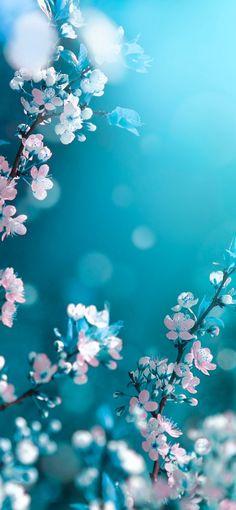 Wallpaper Nature Flowers, Flowery Wallpaper, Spring Wallpaper, Flower Background Wallpaper, Beautiful Flowers Wallpapers, Beautiful Nature Wallpaper, Scenery Wallpaper, Colorful Wallpaper, Flor Iphone Wallpaper