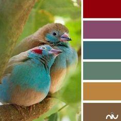 color. jwt