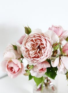 Spring is blooming <3 #levolove peonies
