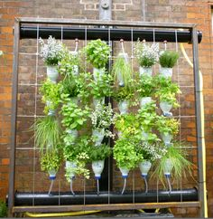 Vertical gardening takes up less space and is very flexible as to location. Consider this for an apartment balcony. It is a herb garden, planted in old javex bottles, with an irrigation system built in from rain water collection.