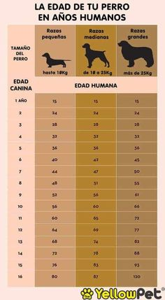 Your Dog's Age In Human Years: A Conversion Chart Your Dog's Age In Human Years: A Conversion Chart Dog years calculator infographic Dog Health Tips, Pet Health, Dog Ages, Dog Information, Info Dog, Pet Dogs, Pets, Weenie Dogs, Dog Language
