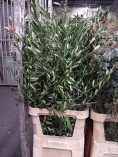 #Olives 120cm: Available at www.barendsen.nl