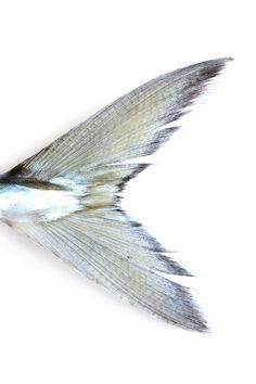 mackerel | STILL (mary jo hoffman)