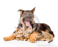 Happy Puppy Dog Embracing Little Kittens. Isolated On White - Download From Over 44 Million High Quality Stock Photos, Images, Vectors. Sign up for FREE today. Image: 61048803