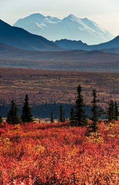 Autumn changes in the Alaskan wilderness