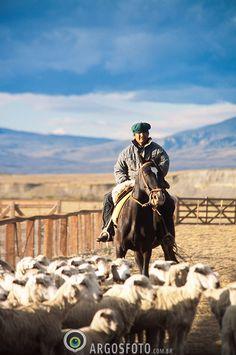 sheep farm, El Rincon Estancia, El Calafate, Santa Cruz Province, Patagonia, Argentina