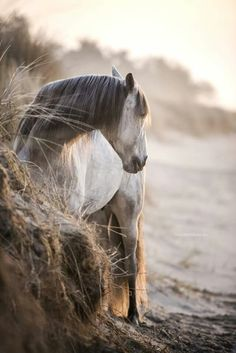 Horse by sandy hill.
