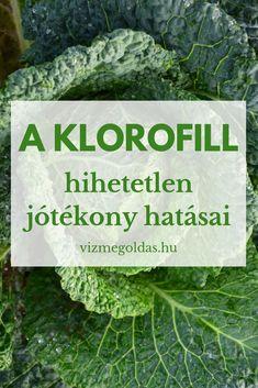 Health 2020, Lettuce, Cabbage, Medical, Vegetables, Live, Food, Medicine, Vegetable Recipes