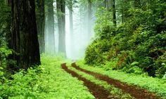 Trekking in a Rainforest