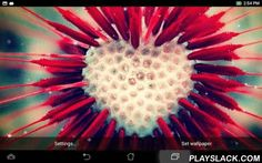"Heart Flower Live Wallpaper  Android App - playslack.com , Heart flower Live Wallpaper opens the wonderful world of blossoming nature bathed in sunshine and morning dew. Immerse yourself in these romantic paradise of heart flowers and feel the fresh breath of spring. Gorgeous and cute backgrounds depicting ""spring flowers"", adorable bleeding hearts, dandelions, and other heart-shaped wild flowers will take your breath away. The floral explosion ""Heart flower LWP"" offers will make you fall in…"