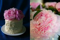 Pink Ombré Vanilla Cake - Honest To Nod