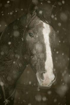 horse in snow Loudoun County