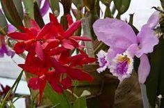 Resultado de imagen para bromelias y orquideas