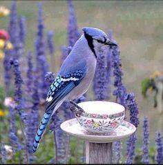 vintage china bird feeder