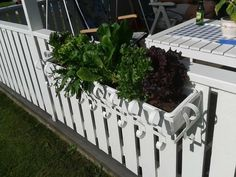 Plantation without snails (Facebook)