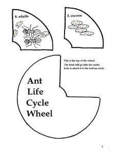 ant life cycle worksheet ants and wasps insects with a waist family formicidae over. Black Bedroom Furniture Sets. Home Design Ideas