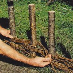 Buy Wattle Fencing | Begin weaving the willow stems or other pliable branches around the ...