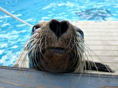 Hello, from all of us at Gulfarium Marine Adventure Park in Fort Walton Beach