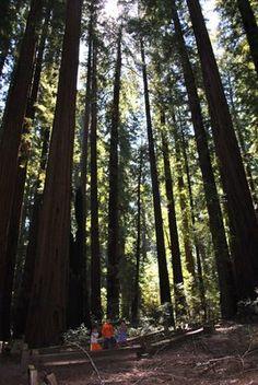 Richardson Grove State Park - Leggett, California