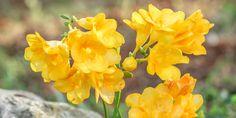 Herbs, Rose, Plants, Gardening, Decoration, Decor, Pink, Lawn And Garden, Herb