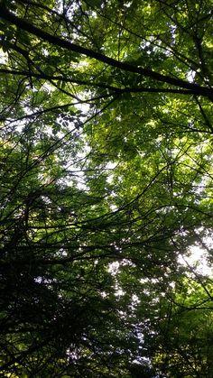 CÉU Verde
