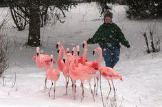 Winter yard idea!!!!!!!!!!!! Looooove this!!! Looks like she is chasing them back in the yard;)