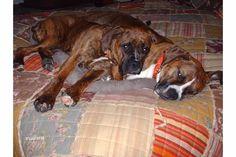 Piper and Jade snuggles