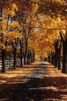This is my dream. A tree lined driveway leading to a beautiful country farmhouse sitting on a lake. Tree Lined Driveway, Long Driveways, Driveway Landscaping, Pebble Driveway, Landscaping Contractors, Photo Images, Autumn Scenery, Stock Foto, Belle Photo