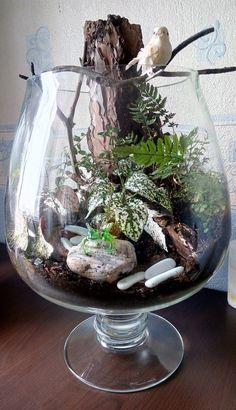 IMG_20160407_131222 Garden Terrarium, Succulent Terrarium, Succulents Diy, Planting Succulents, Plants In Glass Bowl, Inside House Plants, Indoor Water Garden, How To Make Terrariums, Little Gardens