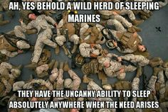 A heard of sleeping Marines.   ........Say thank you for your warm soft bed.