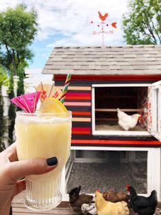 Meyer Lemon Coladas | drinkingwithchickens.com