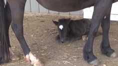 Link to Live feed!!!  http://www.marestare.com/fcam.php?alias=cloudcamA newborn horse in Louisa County is drawing attention from around the world.  Thousands of people tuned into a live stream Tuesday morning to watch its birth at Legacy Mustang Preservation.  The colt is believed to be the great grandson of Cloud - a stallion who has been featured in award-winning films. Now, this newborn is filling the shoes of his famous relative.