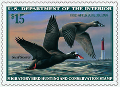 U.S. Fish & Wildlife Service - Migratory Bird Program | Conserving America's Birds