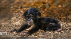 Photograph 3 months ;-) by Sonja Probst on 500px