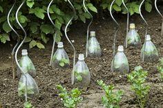 Öntsünk szódabikarbónás vizet a paradicsomra, elmondom, miért! Farm Business, Winter Garden, Vegetable Garden, Sea Shells, Flora, Glass Vase, Home And Garden, Landscape, Nature