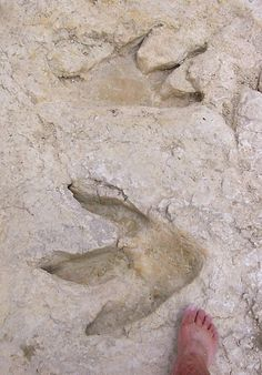 Dinosaur footprints! ** I would Love to see real dinosaur footprints!