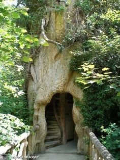 A perfectly formed tiny house inside of a tree trunk