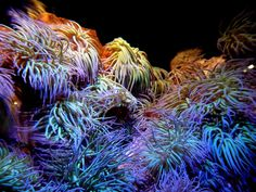 Aquarium - récifs - Lampe LED