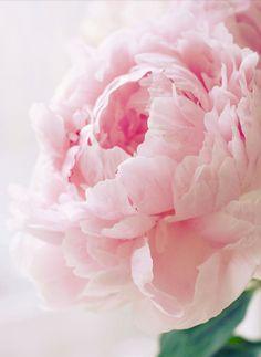 pink poenie